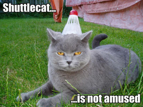 shuttlecat-is-not-amused-771503