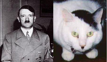 cats_that_look_like_hitler