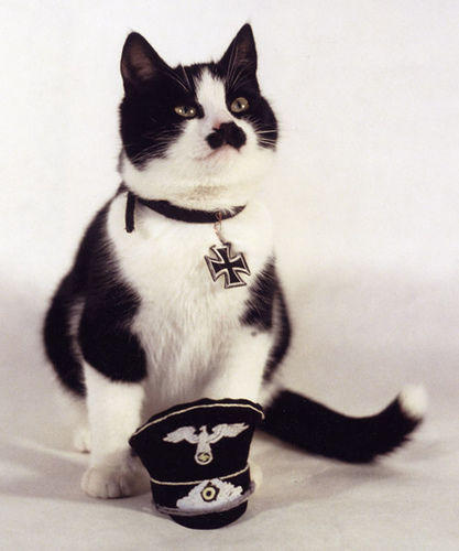 kitler_Cats_that_look_like_Hitler