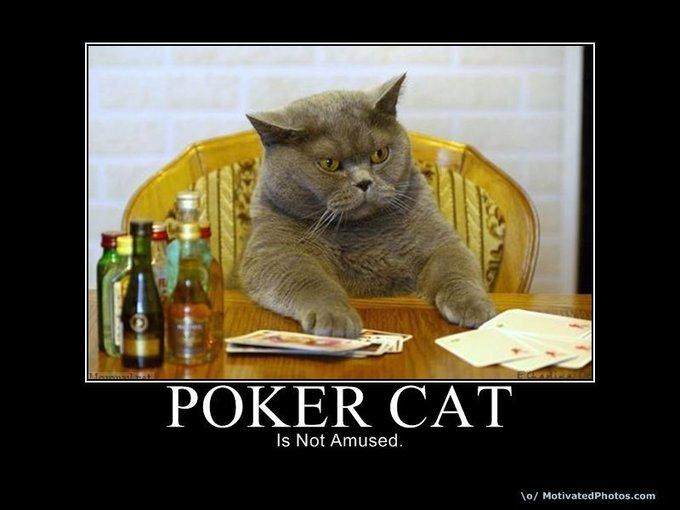 633740368710825040-pokercat