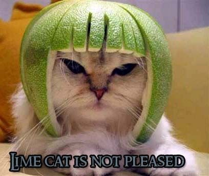 Limecat_not_pleased