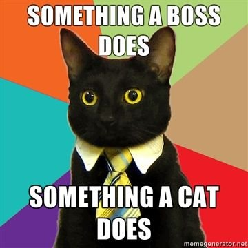 Something-a-boss-does-Something-a-cat-does