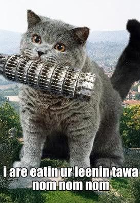 cheezburger-cat